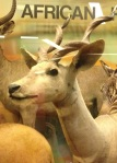 The Lesser Kudu is a forest antelope from East Africa.