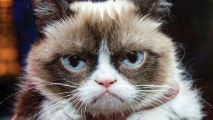 Grumpy Cat Image source: AP Images