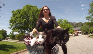 Image source: Bernadette McClure and her bike riding cats on Vimeo from the Cats Need blog